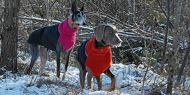 Chilly Dogs
