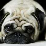 Pugalug-Featured