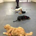 WWW-Obedience-Training