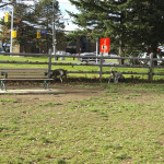 G-Ross-Lord-Park-Dog-Park-Off-Leash-Dog-Walking-Area-800-3