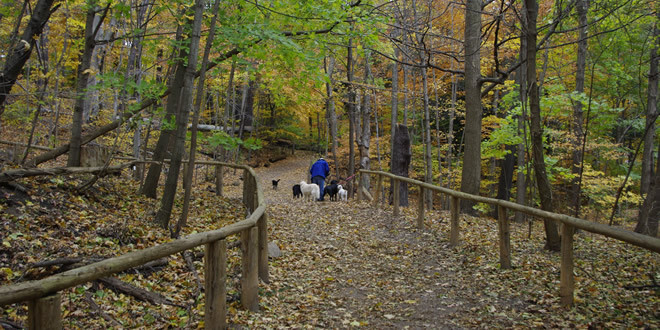 Sherwood Dog Park Toronto