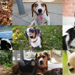 Summary of Toronto & Ontario Dog Rescue Organizations