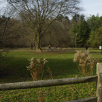 Sunnybrook-Park-Dog-Park-Off-leash-Dog-Walking-Area-800-4