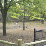 Yonge-York-Mills-Dog-Park-Off-leash-Area-3